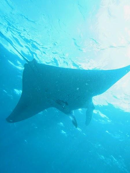 バリ島:レンボンガン島からペニダ島、マンタベイでシュノーケリング