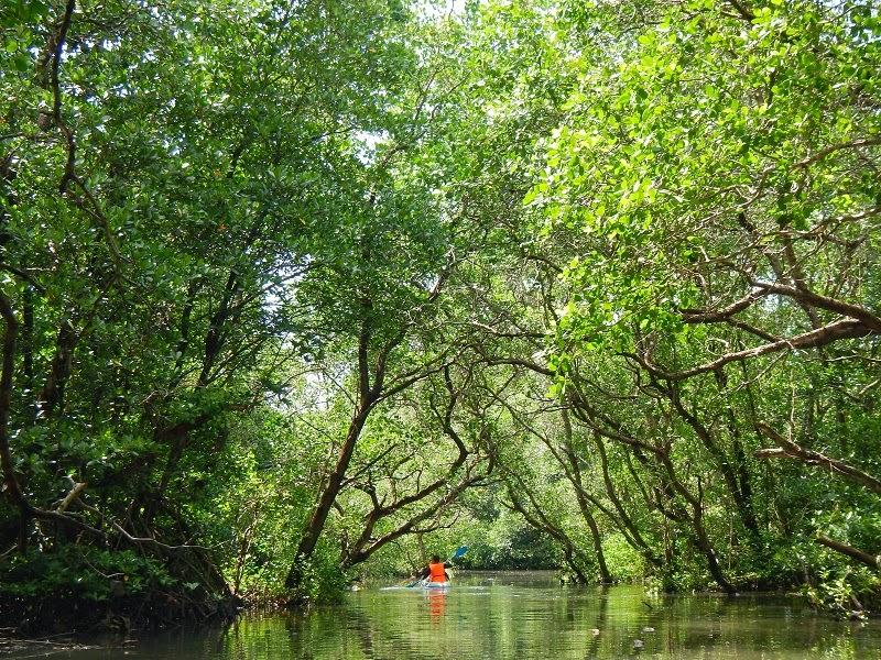 海外就職を考える学生さんと、バリ島でマングローブ探検