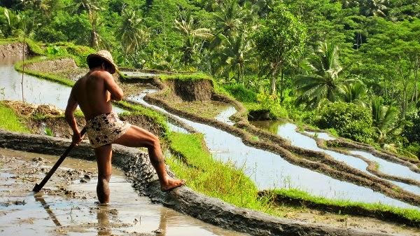 バリ島と日本を繋ぐ米作りの文化