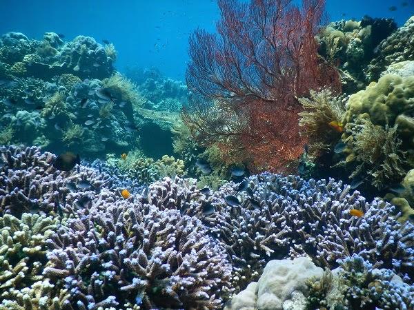 バリ島ダイビングポイント、アメッドで本気のシュノーケリング