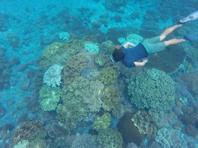 バリ島からレンボンガン島へシュノーケリング専門ツアーとポイント紹介