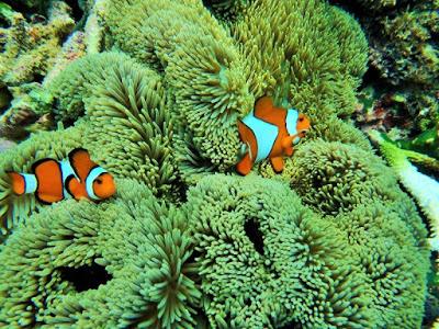 バリ島とレンボンガン島オリンパスの防水デジカメ比較