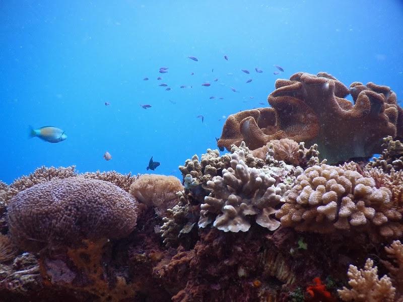 バリ島、レンボンガン島ダイバー遭難事故に関する有志の方々へ